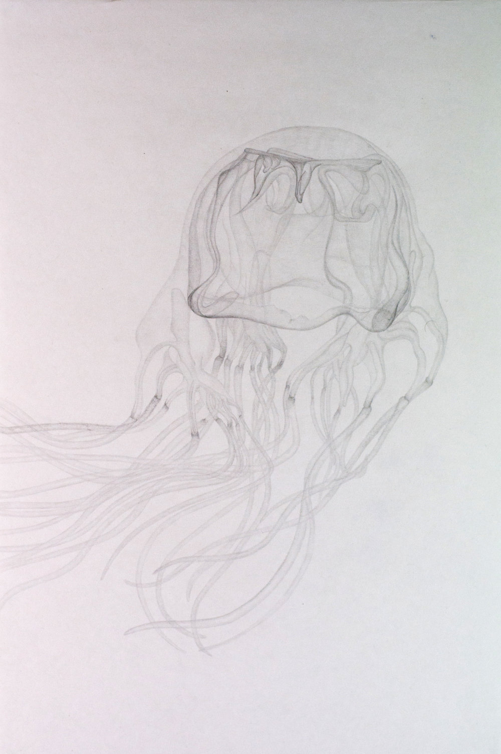 Untitled,  2011. 50cmx35cm. Pencil on paper.