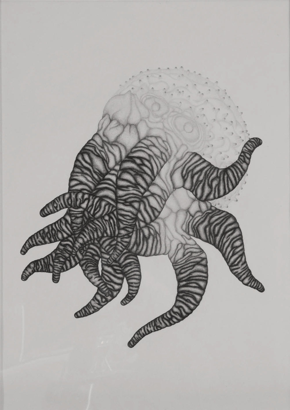 Monster,  2013. 70cmx50cm. Pencil on Fabriano paper.