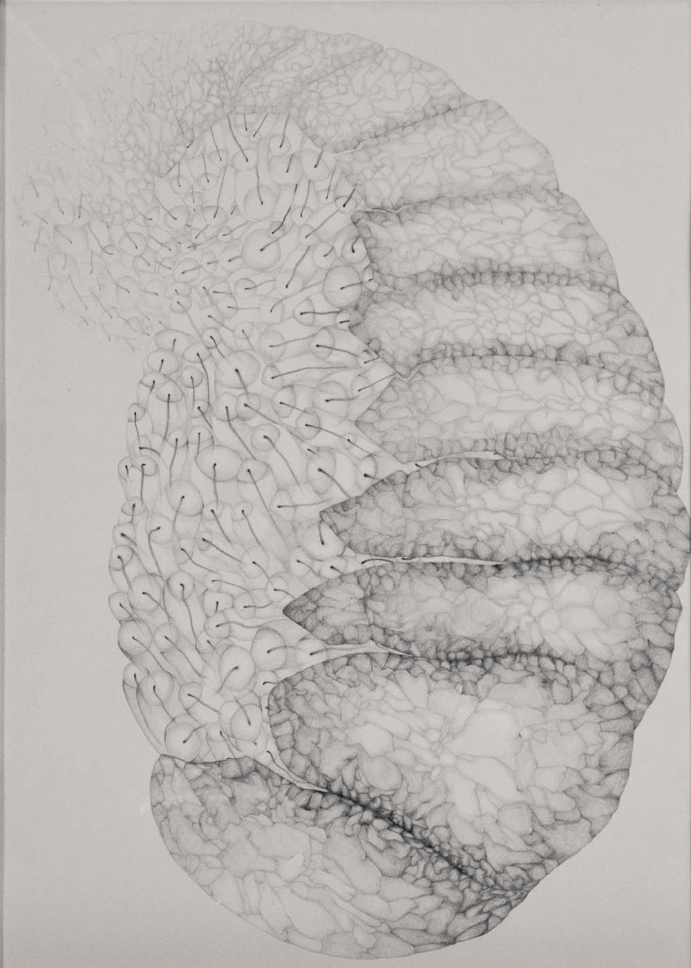 Inside,  2013. 70cmx50cm. Pencil on Fabriano paper.