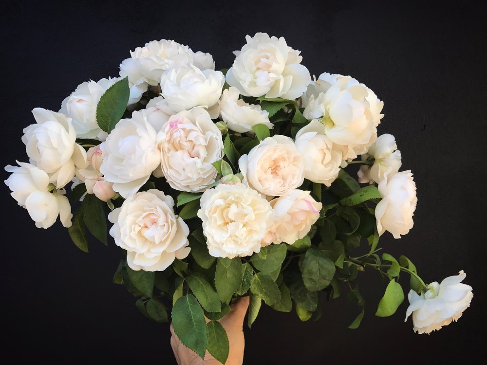 Bridal Bouquet of white David Austin Roses