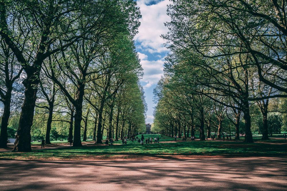 bukingh park.jpg