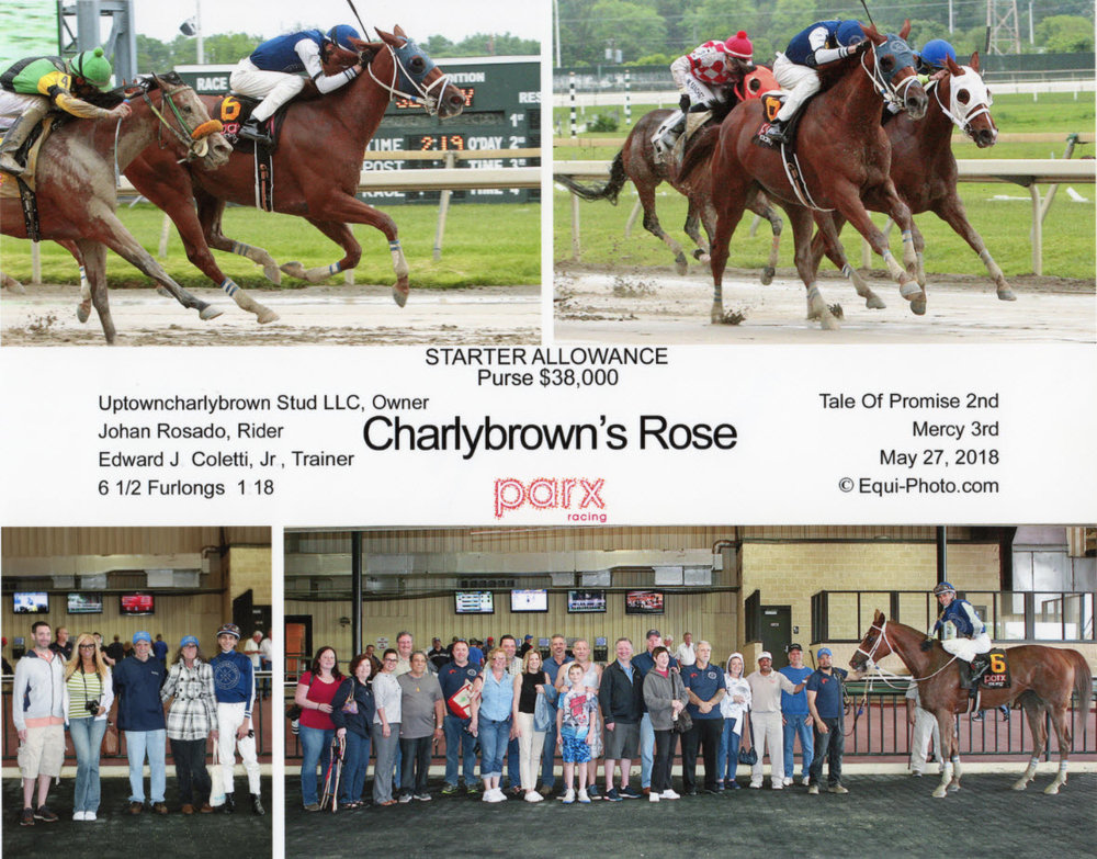 Charlybrown's Rose May 27.jpg