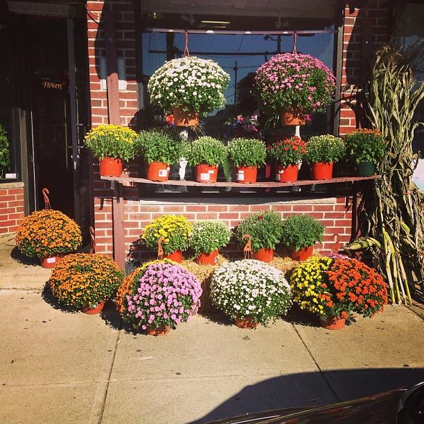 flower shop medford ma florist