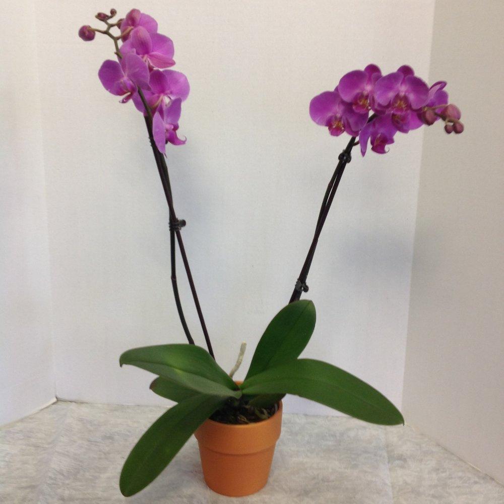 orchid plants -