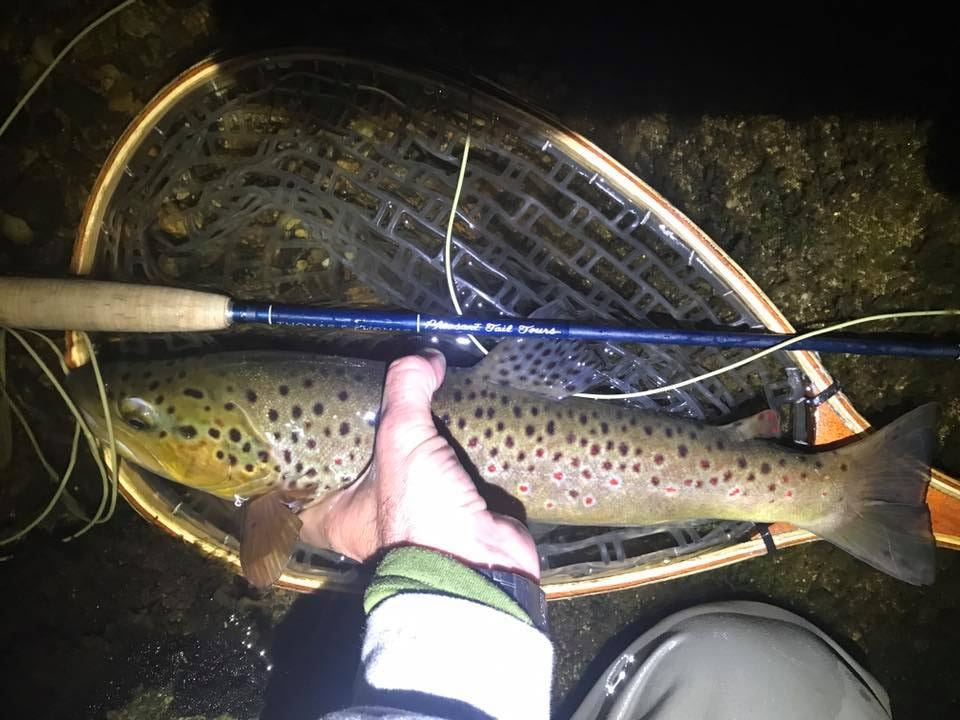 pheasant-tail-tours-trout-guide-brown-trout-deerfield-night.jpg