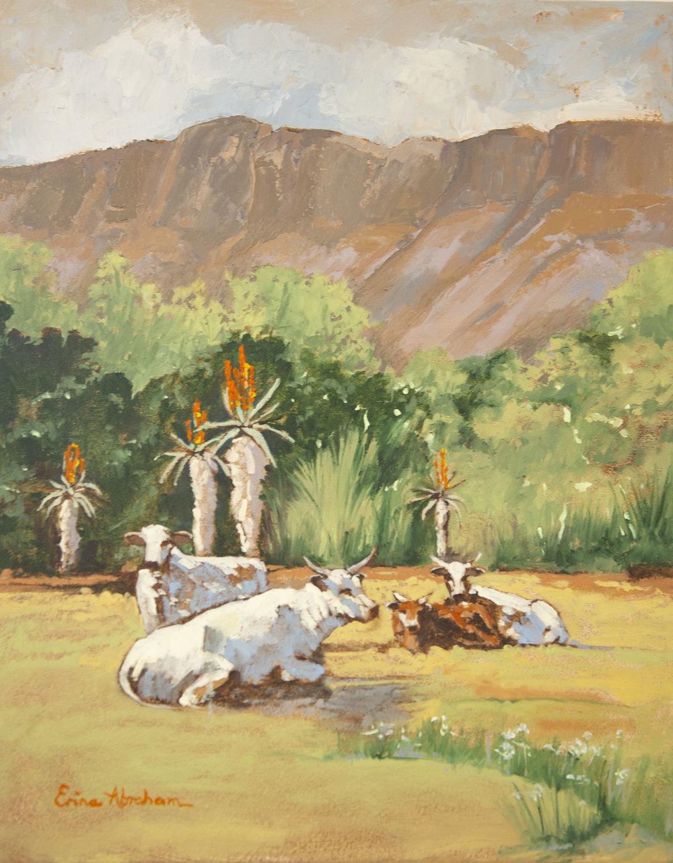 Drakensburg Ngunis