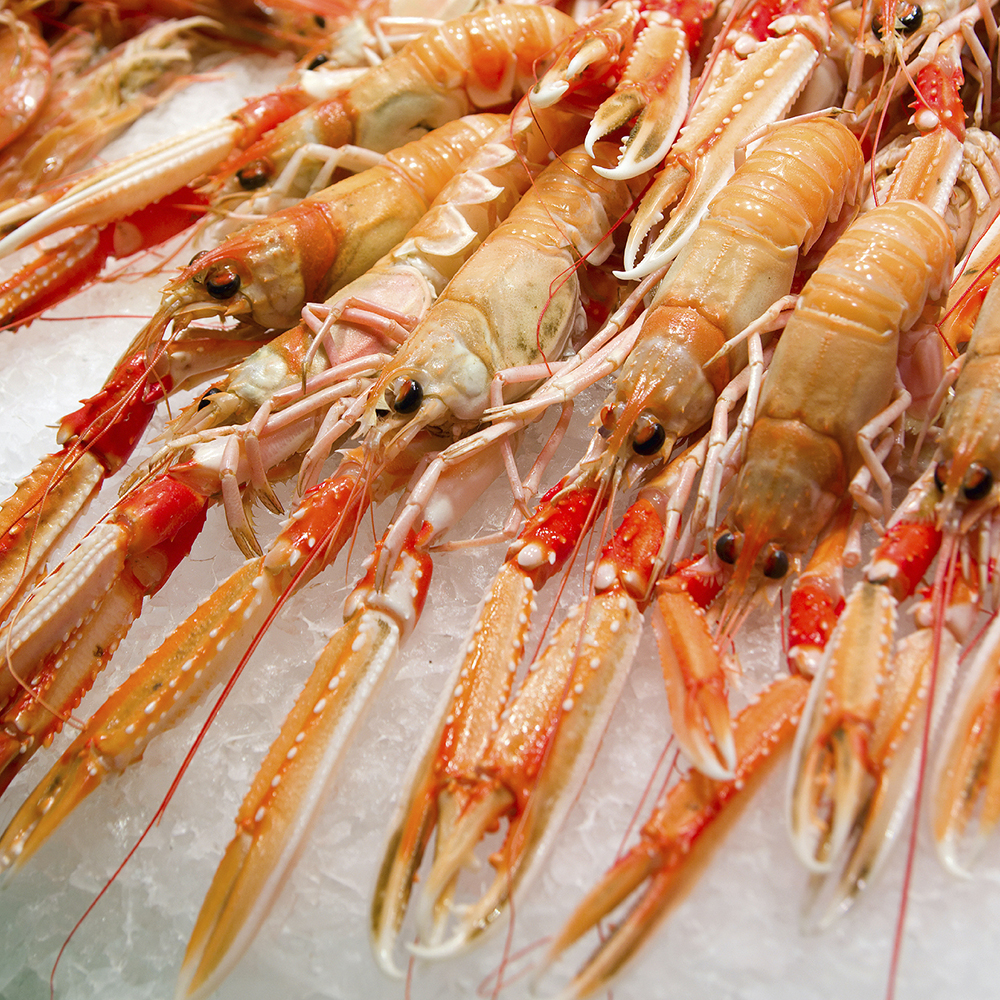 Fresh langoustines from Scotland