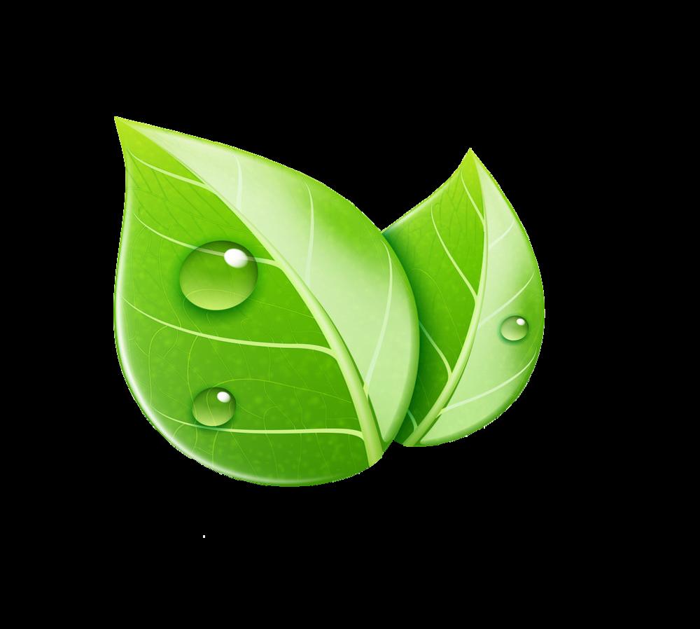 kisspng-leaf-royalty-free-ecology-illustration-leaf-5a999d758e2961.7397757415200167575823.png