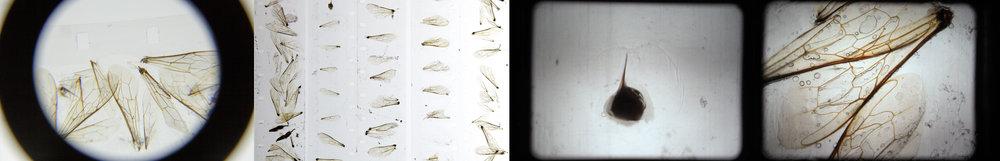 BeelightCollageFinal.jpg