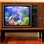 tv - aquarium