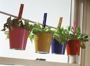 container-gardening-ideas