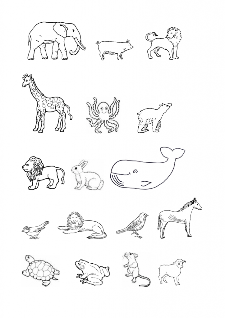 9God-made-many-animals-lessonEng-_005-724x1024.png