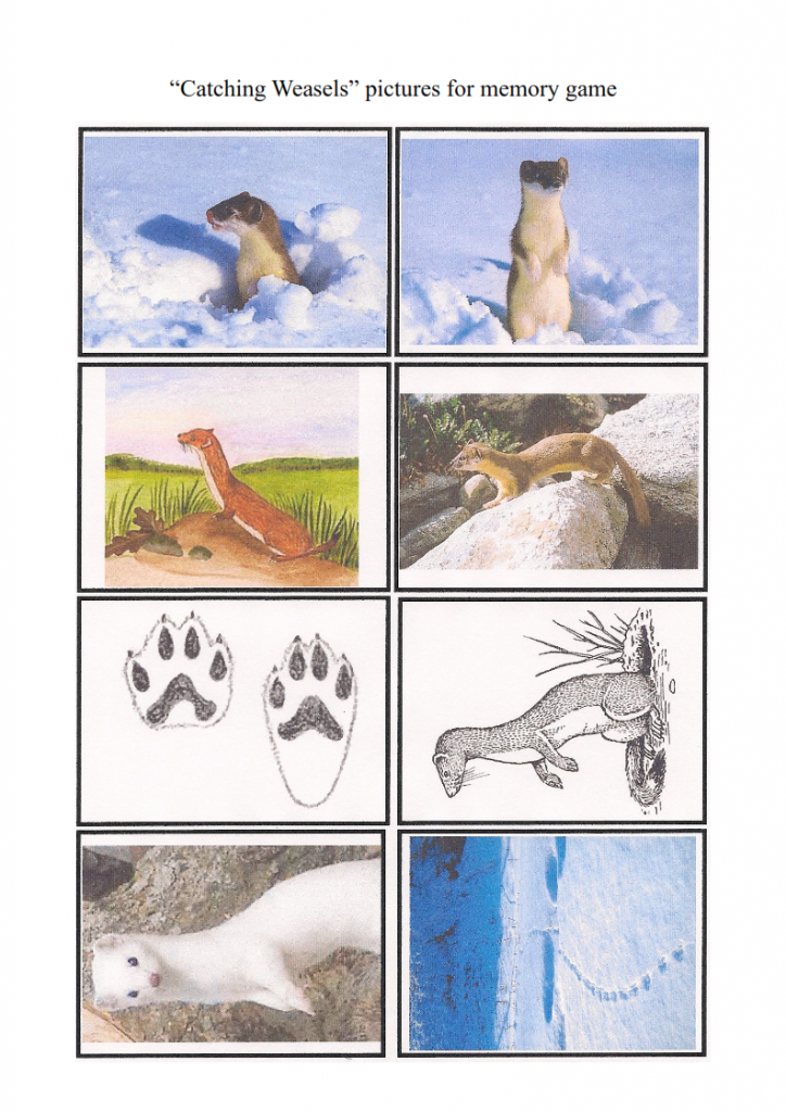 5.-The-Weasel-lesson_007-724x1024.png