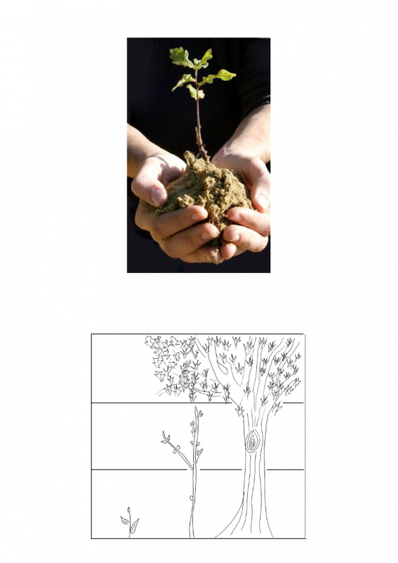 11.-Growing-period-lessonEng_020-565x800.png