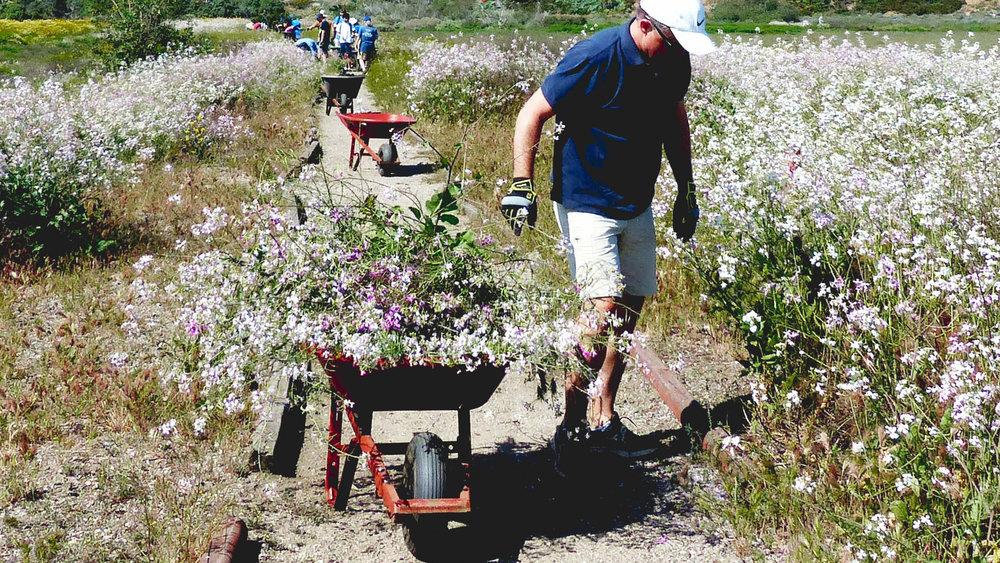 Community Restoration - Saltwater Marsh