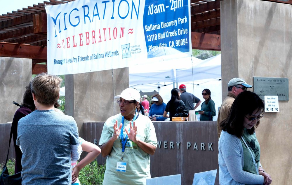 Migration Celebration Volunteer