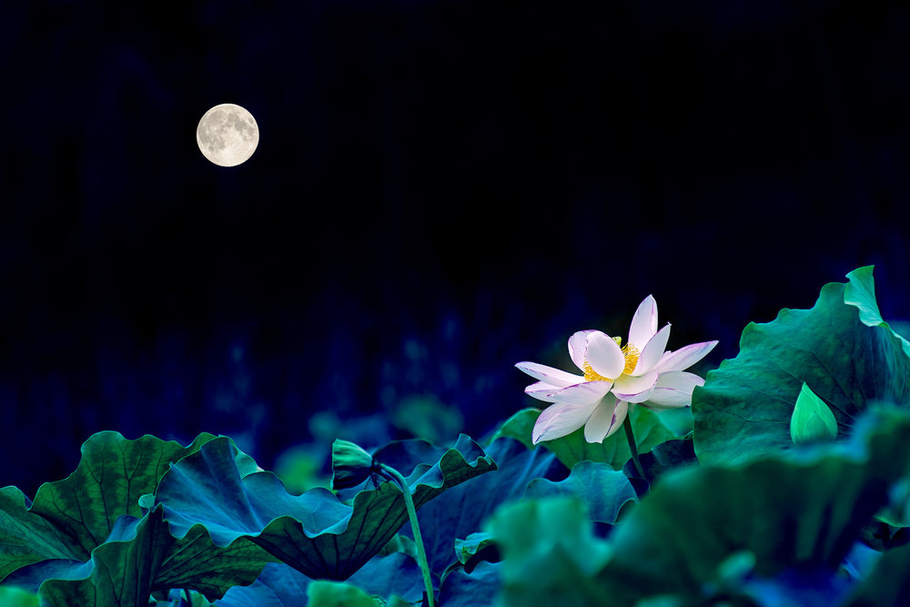 "Tranquil image for this  poem inspired by ancient Chinese music ""春江花月夜"" - ""A Moonlit Night on the Spring River"" (Played with Vertical Bamboo flute/Chinese Bamboo Xiao)  (Picture source  699pic.com )"