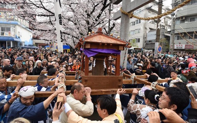 Matsuri during sakura season (April)