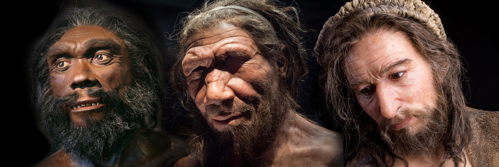 Homo heidelbergensis , Neanderthal,  Homo sapiens .