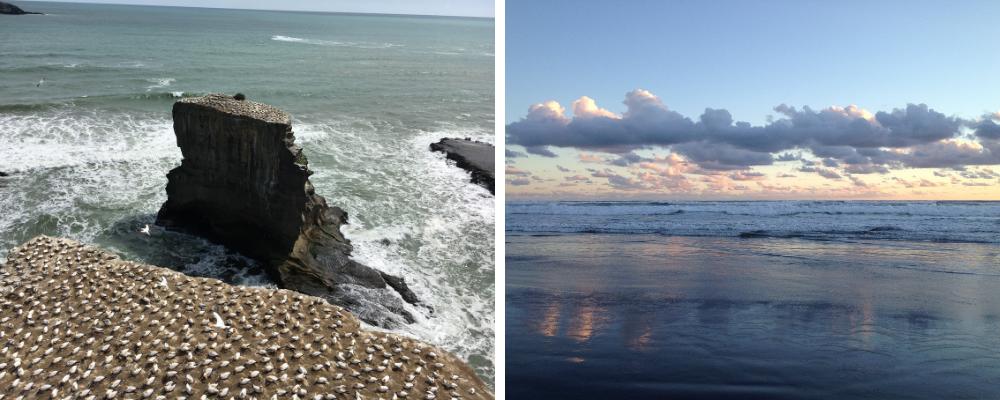 Muriwai Beach and Gannet colony