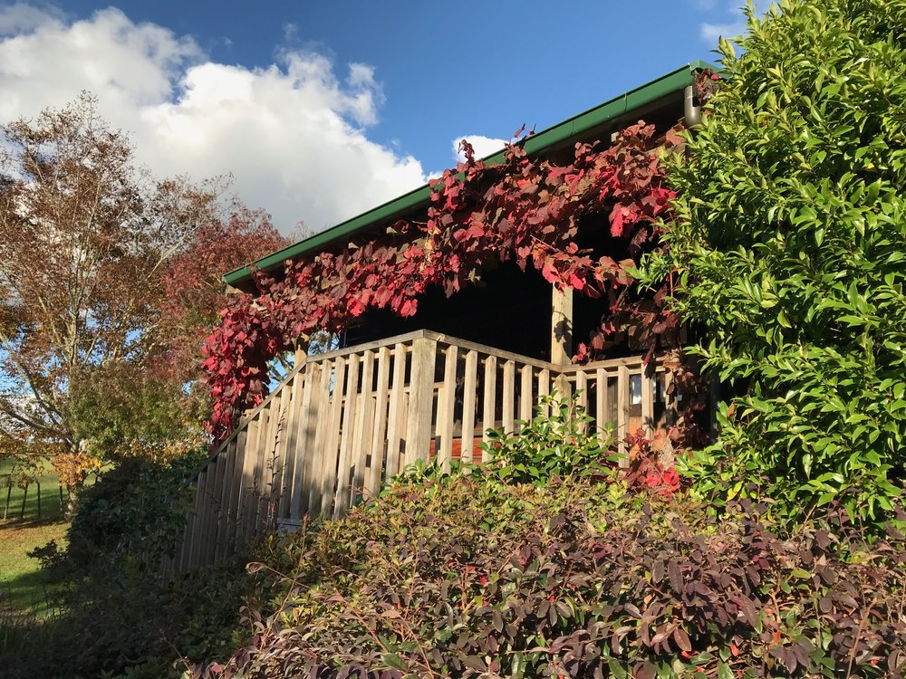 Cottage with red leaves.JPG