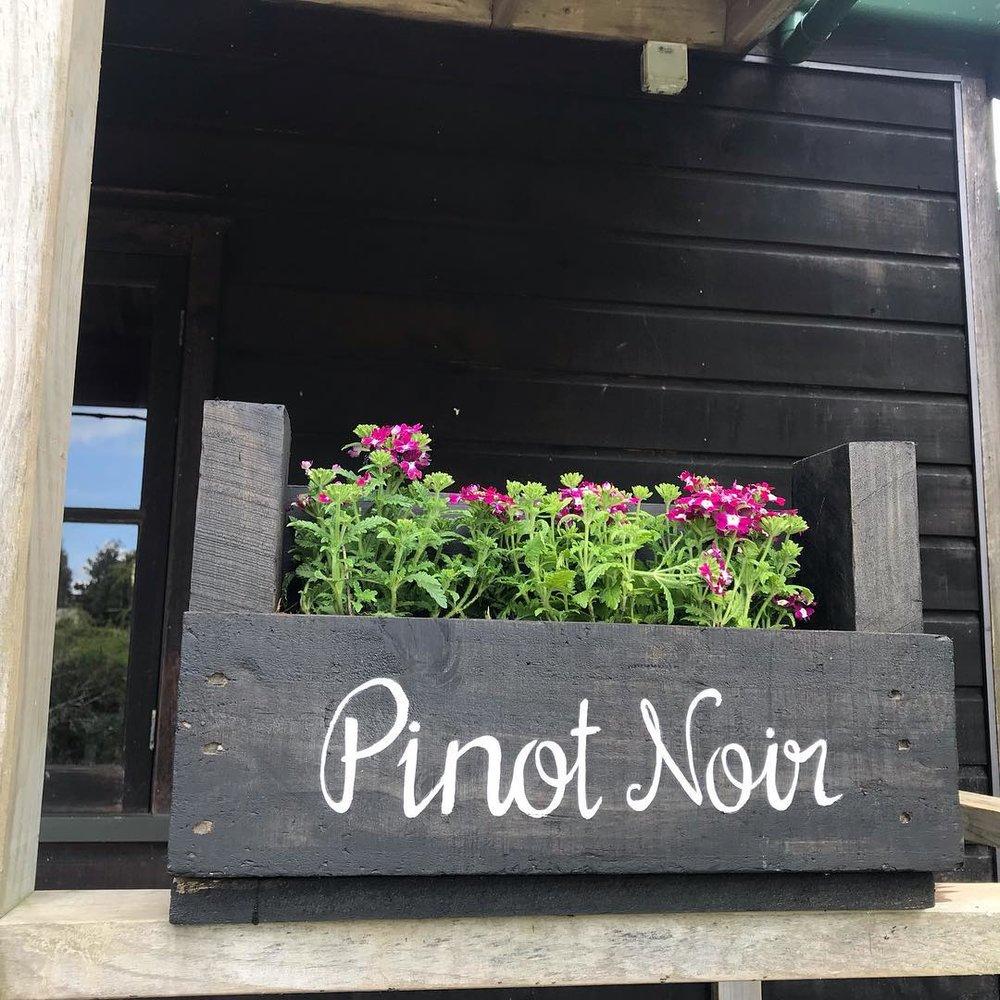 Pinot noir flowers.jpg