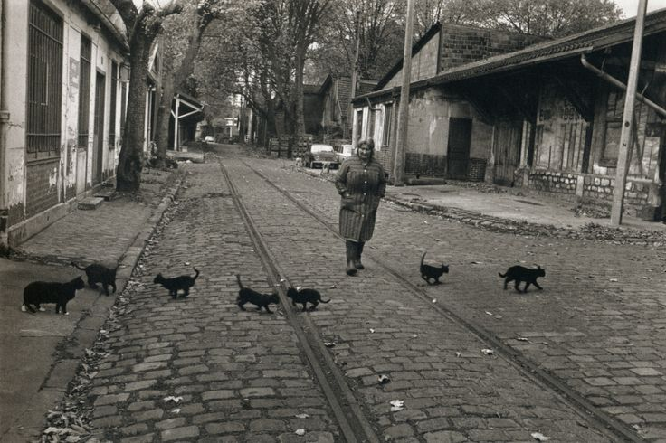 Robert Doisneau The Cats of Bercy.jpg