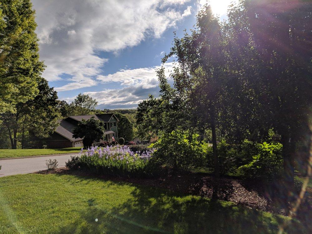 flowers and sky.jpg