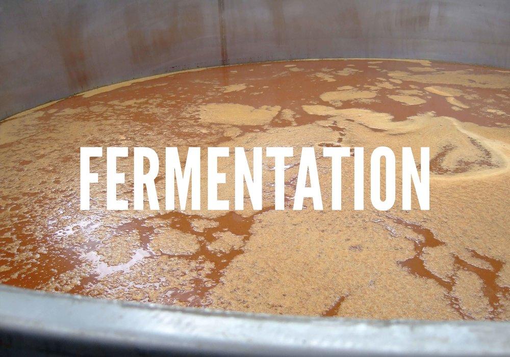 COVER.-Fermentation.jpg