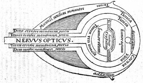 Diagram of the eye 1572 / Wellcome Images