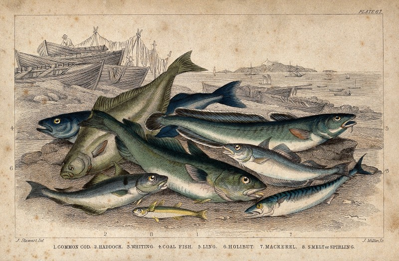 Fish story / Wellcome Images