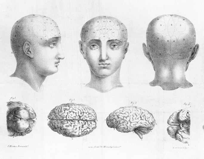 Phrenology, 1835 / Wellcome Images
