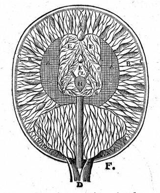 Descartes Diagram / Wellcome Images