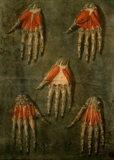 Hand / Wellcome Image
