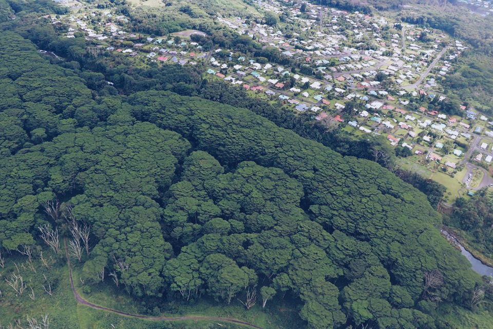 trees helicopter tour hawaii big island hilo travel tourism blogger vlogger influencer carla maria bruno blog lifestyle adventure.JPG