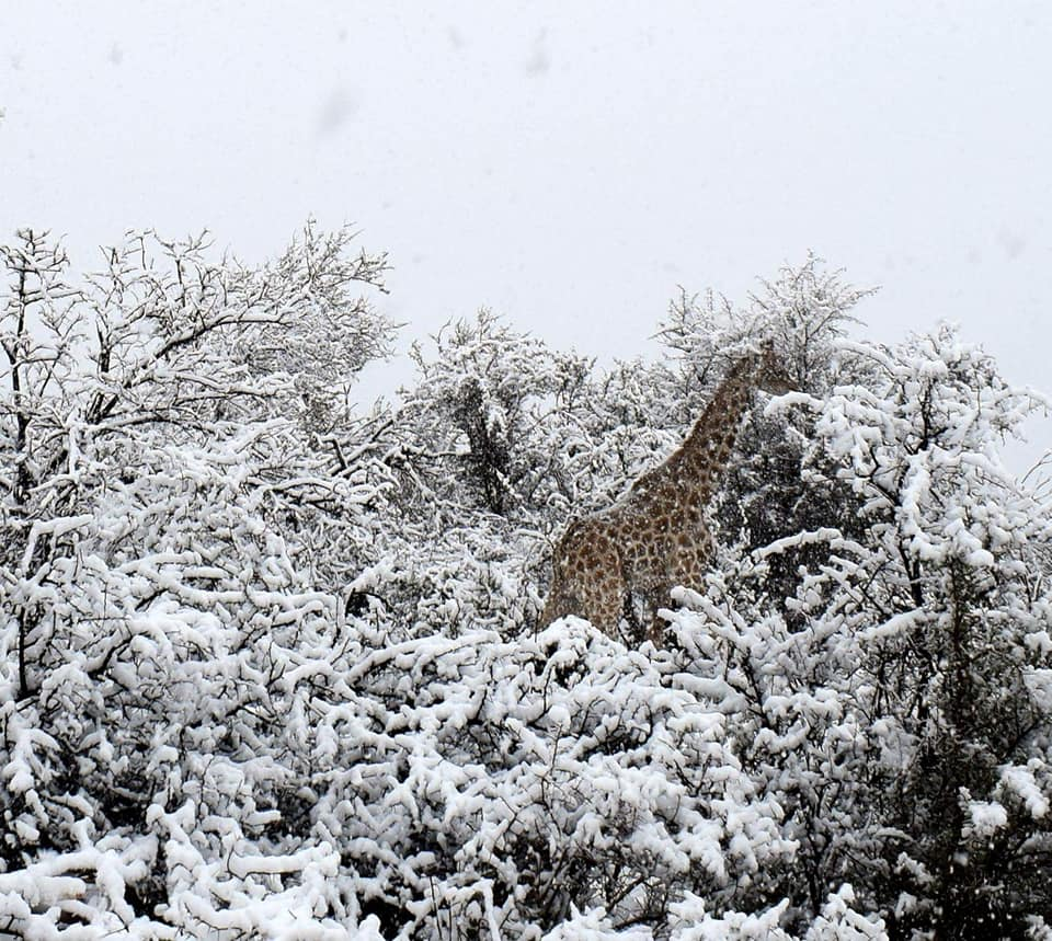 SNOW GIR.jpg
