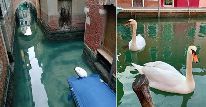 Image result for Fish Return To Venice Canals As Water Becomes Clean During Coronavirus Lockdown
