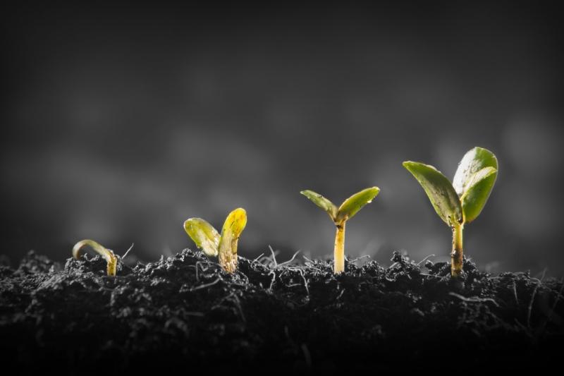 groei-cocreatie-iteraties.jpg
