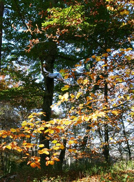 Alingsås, autumn