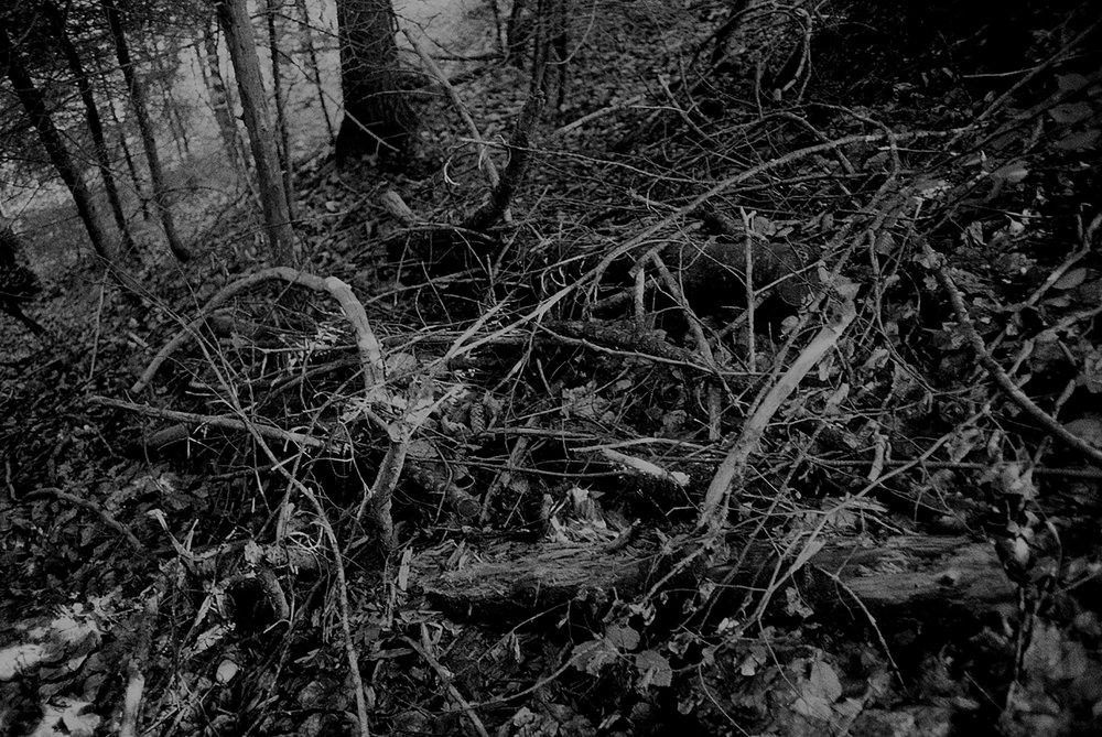 05_archiv_fotografie_meier_ueber_meier_weg.jpg