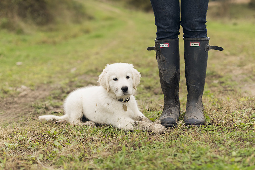 gavin-farms-sully-dog