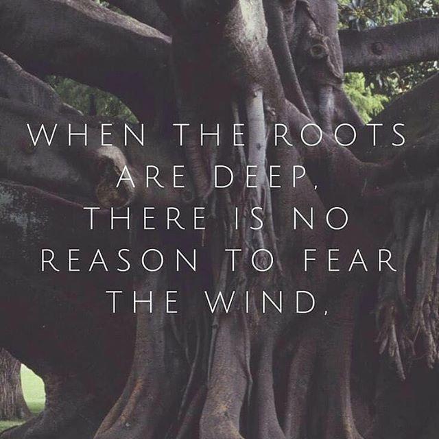 #morning #devotional #verseoftheday #faith #stevehemphilltoday #blessedbythebest #inspiration #Jesus #ministry #stakes #Godspeople #TheGreatIAm #author #teacher #speaker #event #holyspirit #biblical #JesusIsLord #love #JesusChrist #spiritualwarfare #amen #scriptures #prayers #roots #wind #fear #deeprooted