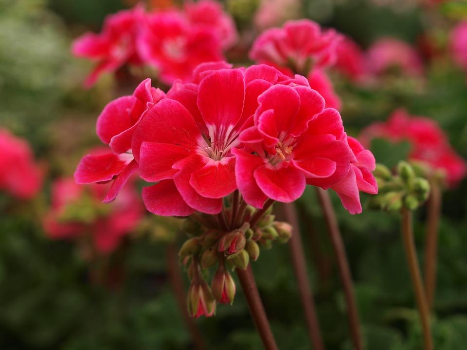flower-3265397_960_720.jpg