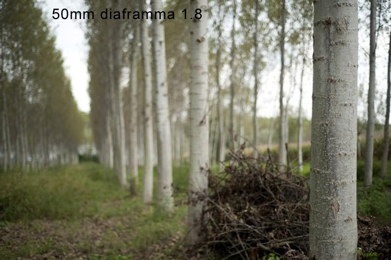 moda060.jpg
