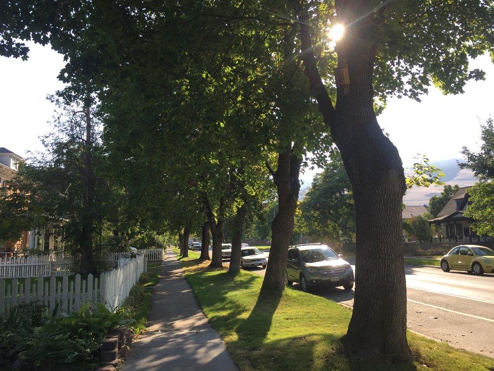 Shady_Sidewalk.jpg