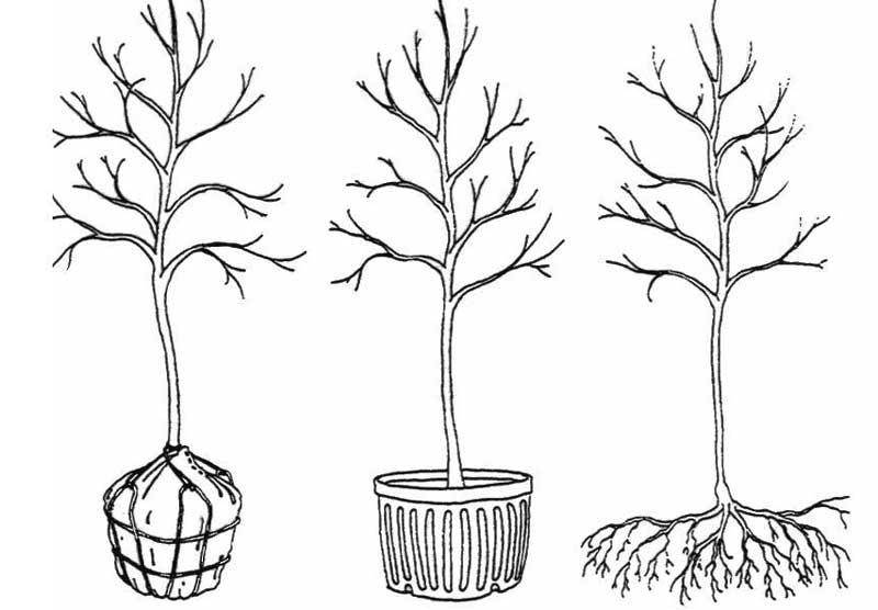 Root Ball Types