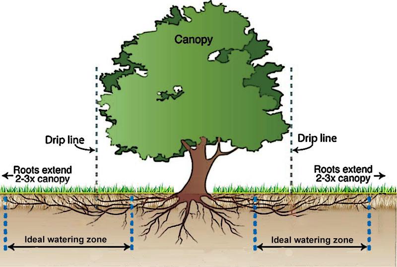 Tree watering cross-section.jpg