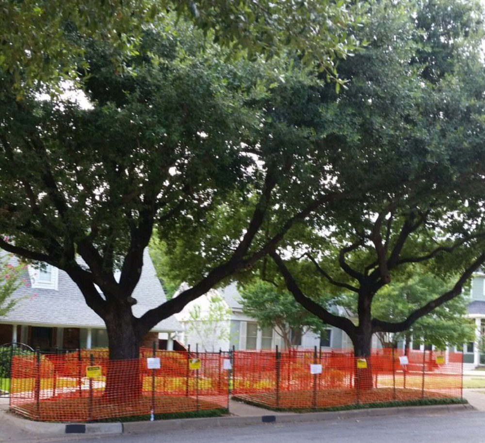 Tree Protection Orange Fencing.jpg