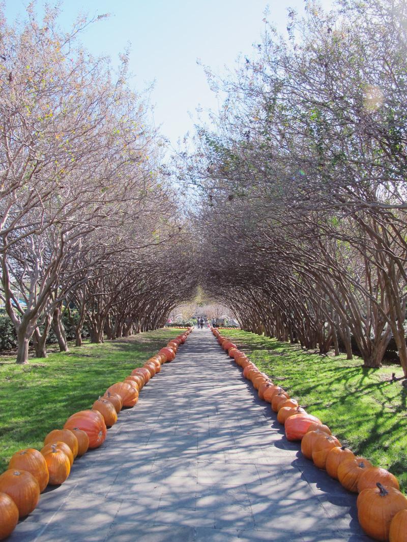 Pumpkins Galore   Dallas Arboretum And Botanical Gardens