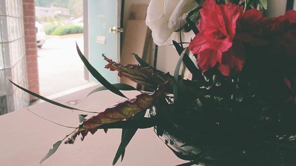 frog-arrangement2.jpg